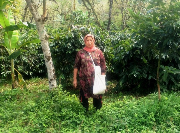 A seasonal coffee picker on a Fair Trade, Organic plantation