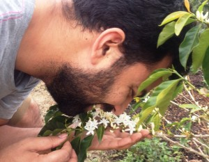 Smelling coffee flowers
